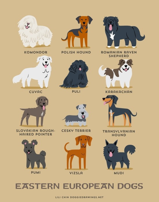 Илустриран водич за потеклото на кучињата