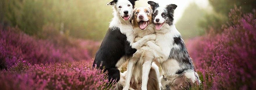 Фотографии од кучиња кои ќе ви го разубават денот