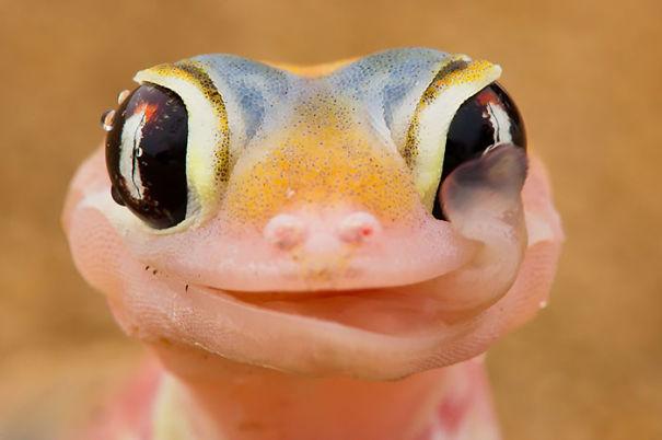 Кој вели дека рептилите не можат да бидат слатки?