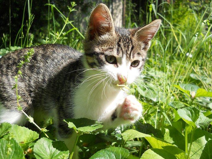 Совети од Маја: Се одлучивте да чувате мачка?