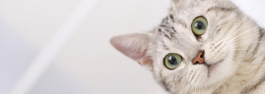 Совети од Маја: Нега за вашата мачка
