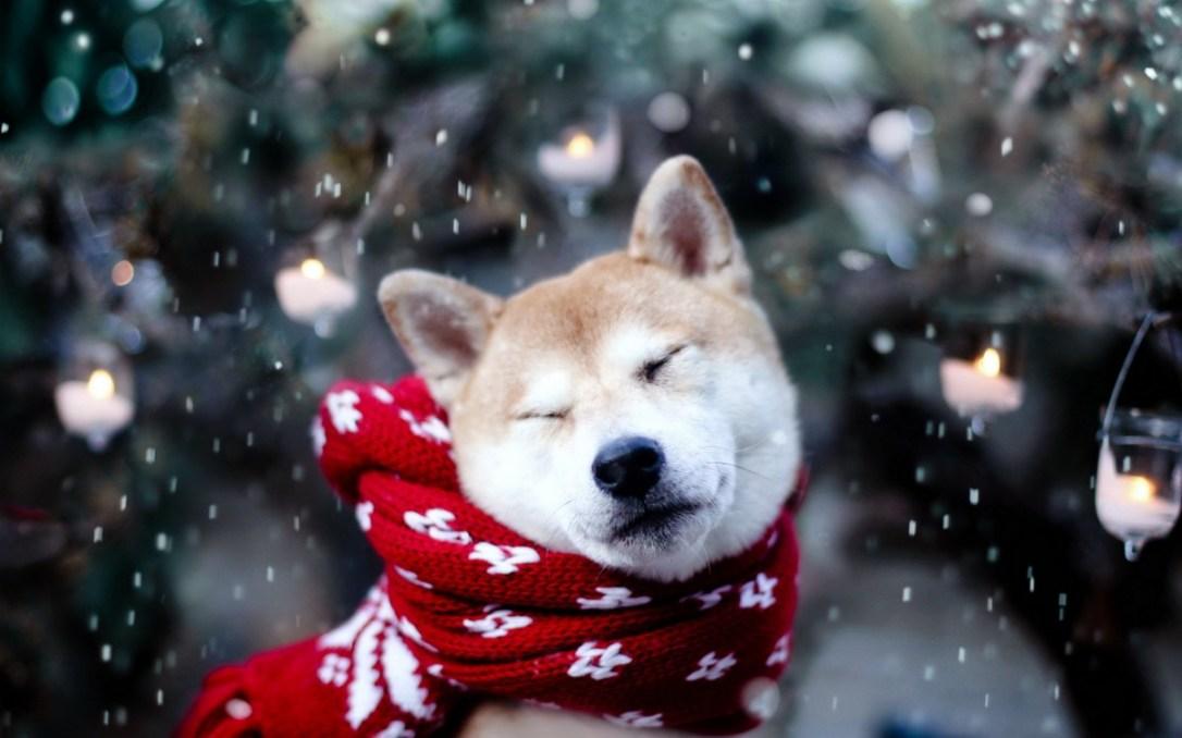 Совети од Маја: Кучињата и студот