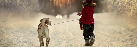 Совети од Маја: Кучешките шепи и снегот