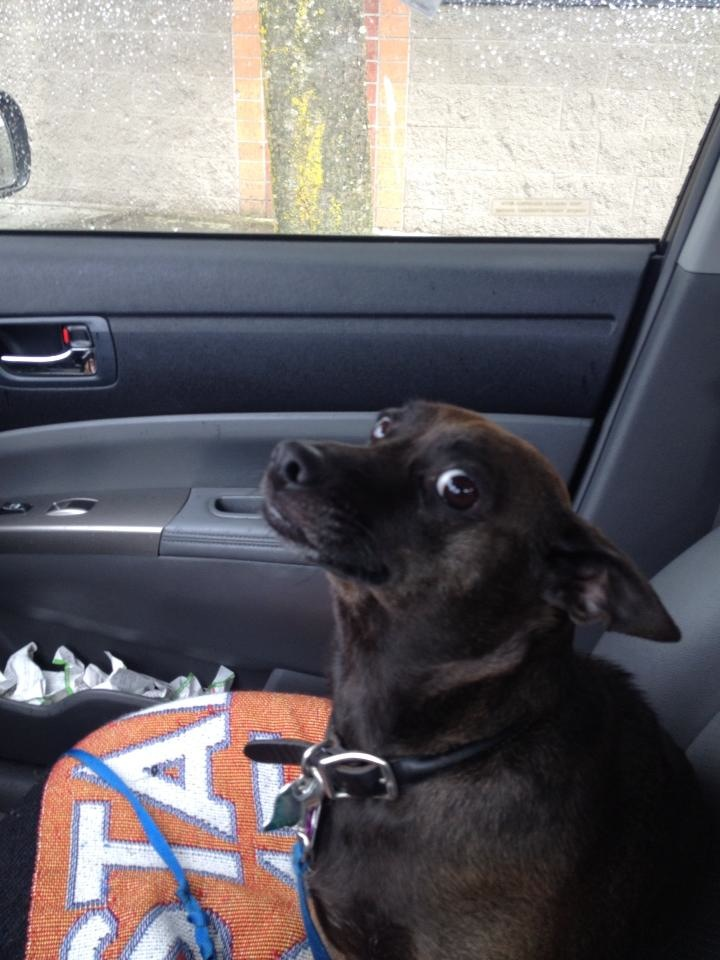 Реакции при посета на ветеринар