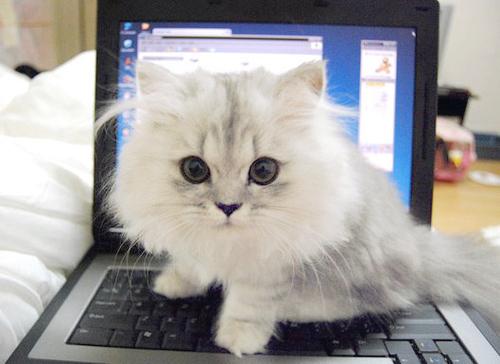 Чудни начини на кои мачките ви ја изразуваат љубовта