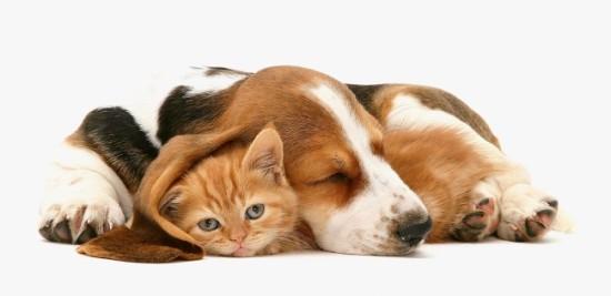 Кој вели дека мачките и кучињата не можат да спијат заедно?