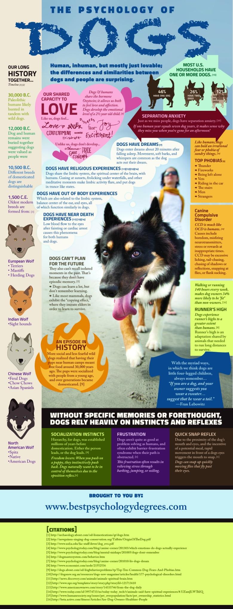 Психологијата на кучињата