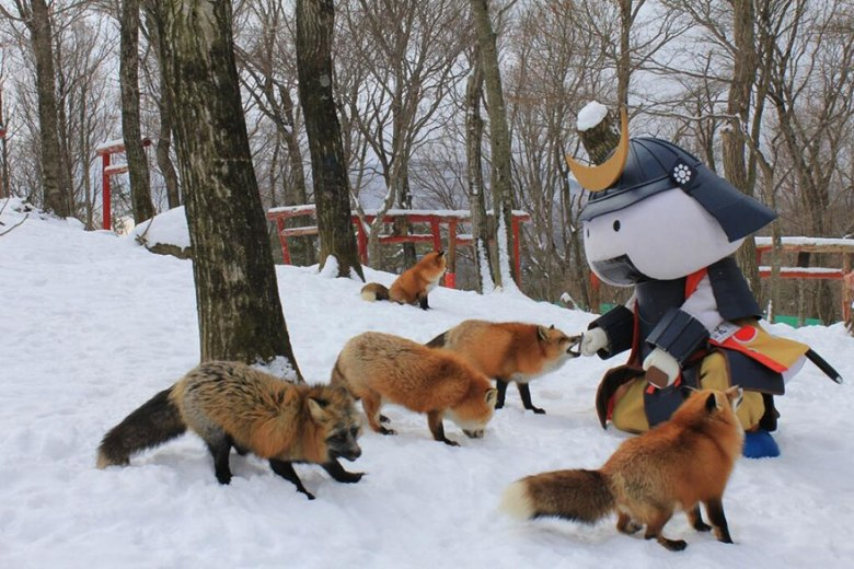 Рај со лисици во Јапонија