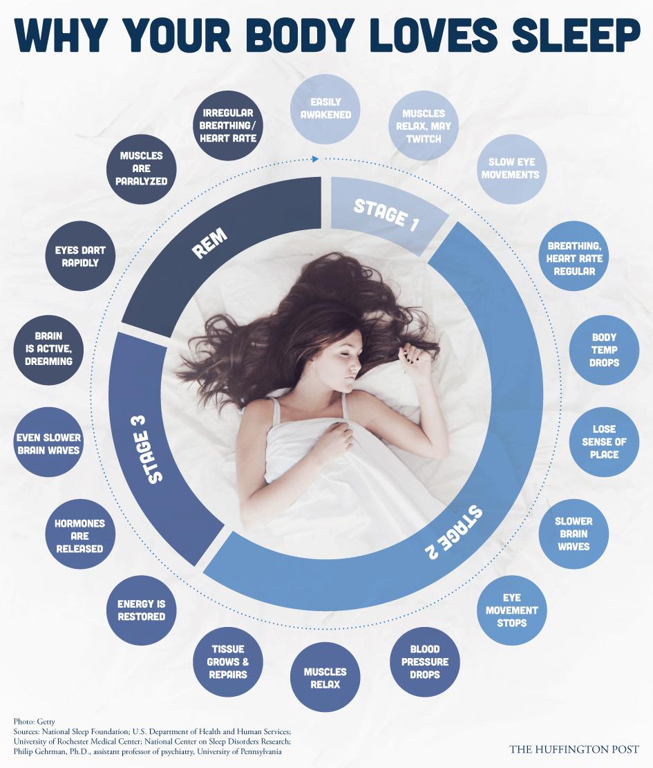 Зошто нашето тело обожава да спие?
