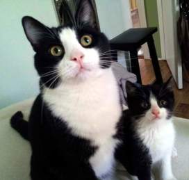 Малите мачиња се копија на своите родители!