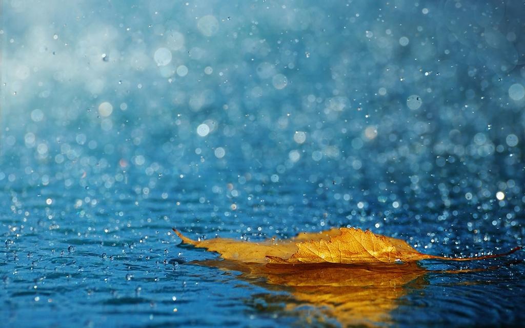 Зошто дождот мириса толку убаво?