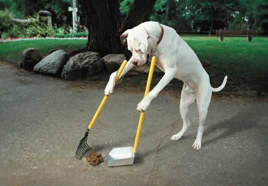 (1) Зошто луѓето не го сакаат вашето куче?