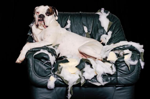 (4) Зошто луѓето не го сакаат вашето куче?
