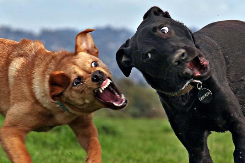(5) Зошто луѓето не го сакаат вашето куче?