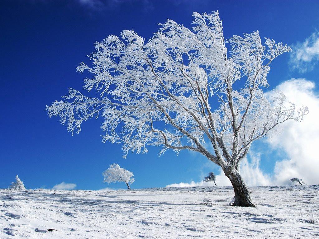 (14) Најубавите снежни десктоп позадини за зимско освежување