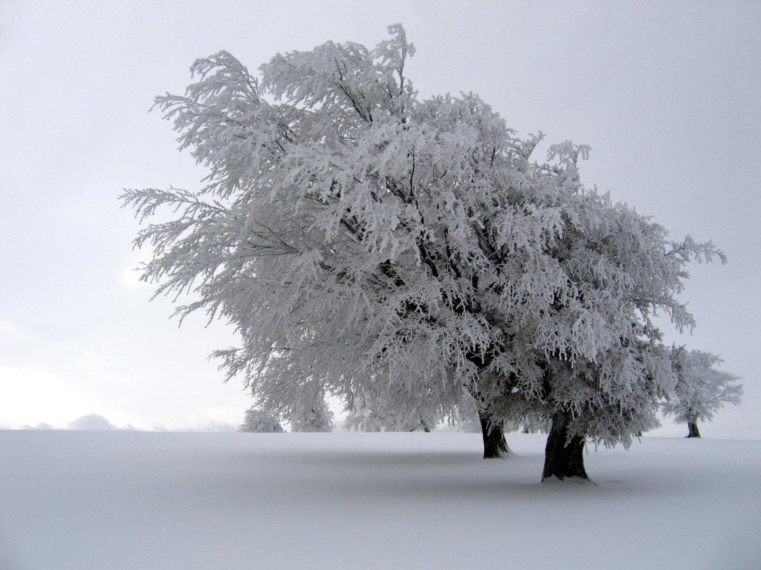 (2) Најубавите снежни десктоп позадини за зимско освежување