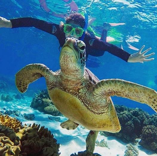 (6) 20 причини зошто Австралија е најдобрата земја за студирање во странство