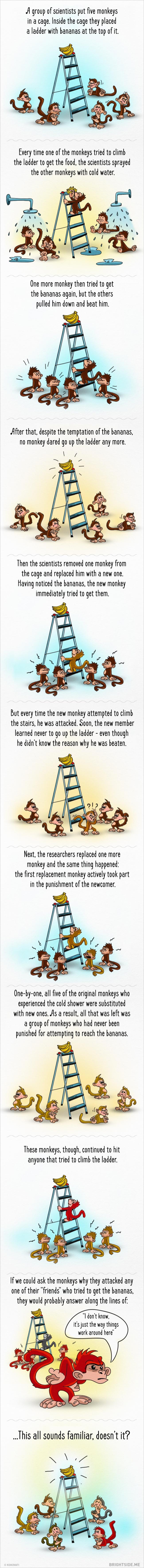 Необичен експеримент ни покажува точно како нашето општество функционира!