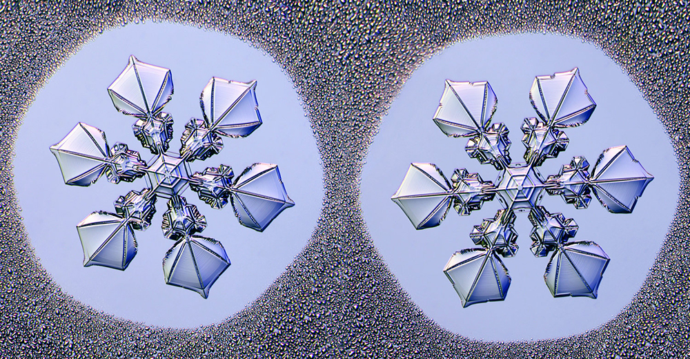 """Фотографијата од""""идентични близначки"""" снегулки што била направени под фотомикроскоп, дизајниран за да ги сними малите снежни кристали (Kenneth Libbrecht)"""