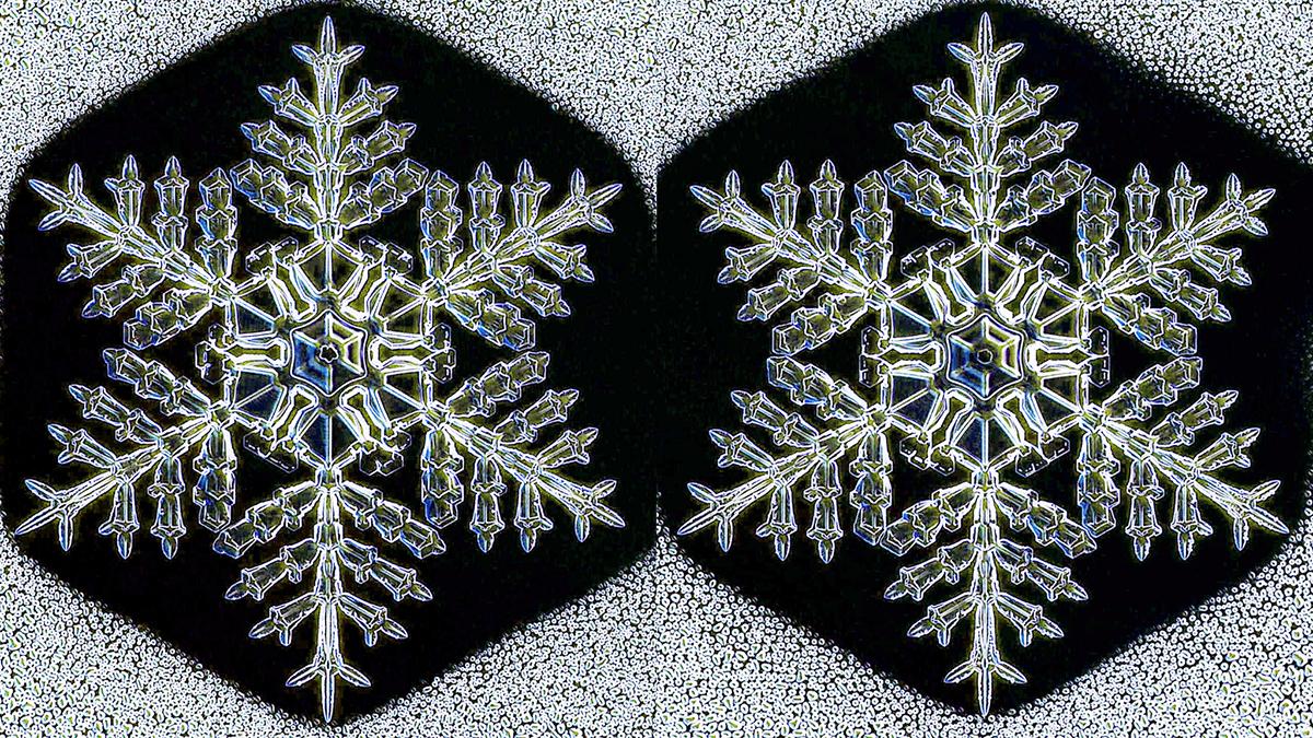 Близначки снегулки, создадени од кристали во исти услови, опкружени со капки вода (Kenneth Libbrecht)