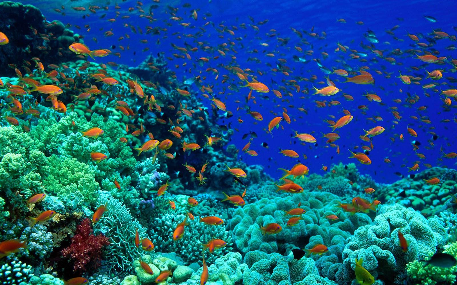 Ако океаните продолжуваат да се затоплуваат, рибите ќе престанат да постојат